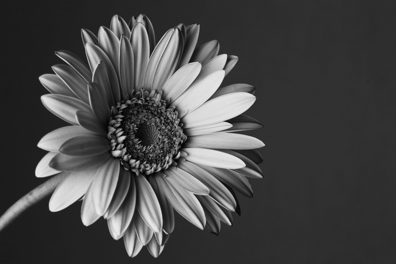 Nick Kent Photography Floral Black And White